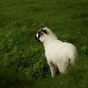 Lamb by Alexa Gurney