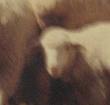 Stephen Hawks - Lamb