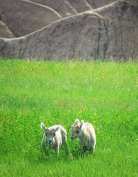 Lambs in a Sea of Green by Elizah Monai