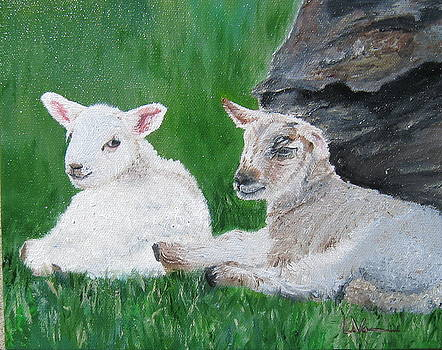 Lambs of Ireland by LaVonne Hand