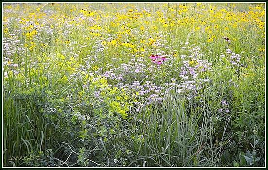 Land of flowers by Sonali Gangane