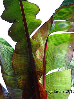 Land of the Giant Leaves 3 by Gail Fischer