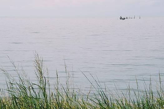 Land to Sea by Deborah  Crew-Johnson