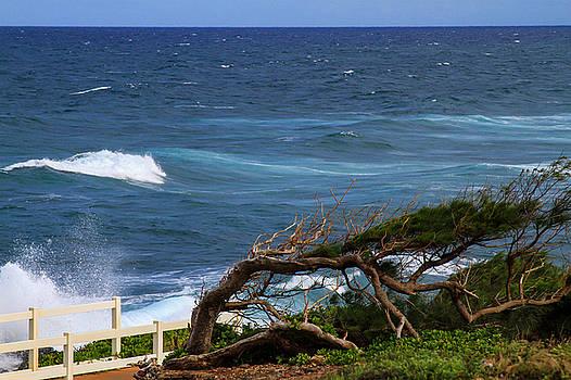 Bonnie Follett - Land Wind and Sea
