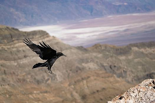 Landing by Brian Bonham