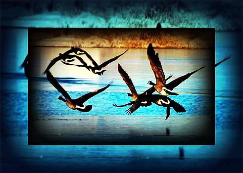 Colette Merrill - Landing Geese