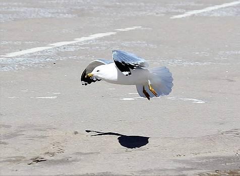 Landing by Stacie Fernandes