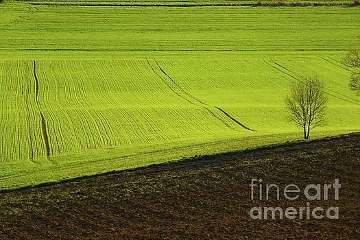 Landscape 4 by Jean Bernard Roussilhe