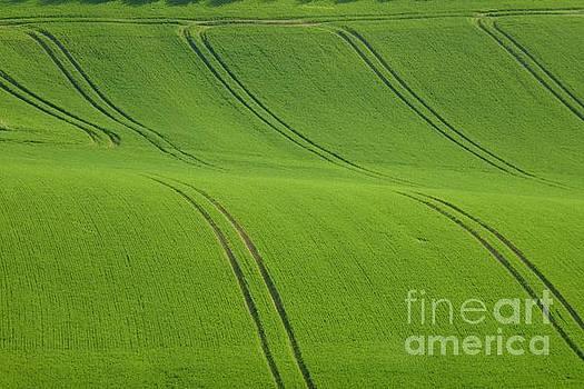 Landscape 5 by Jean Bernard Roussilhe