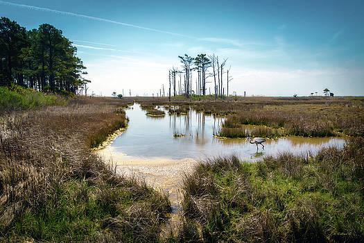 Landscape - Hooper's Island by Brian Wallace