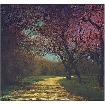 #landscape #nature #trees #road by Judy Green