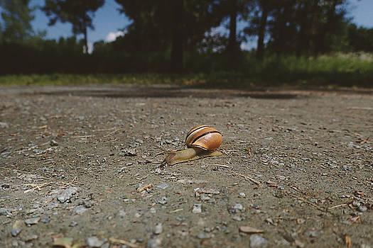 Landscape of the snail by Asbed Iskedjian