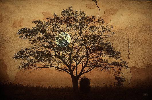 Landscape On Adobe Wall by Dave Gordon
