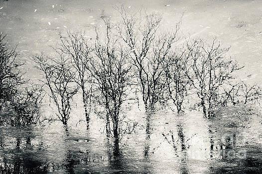 Landscape reflection forest by Dimitar Hristov