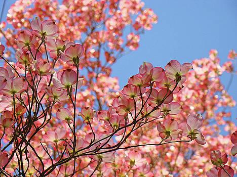 Baslee Troutman - Landscape Trees Blue Sky Pink Dogwood Flowers Baslee Troutman