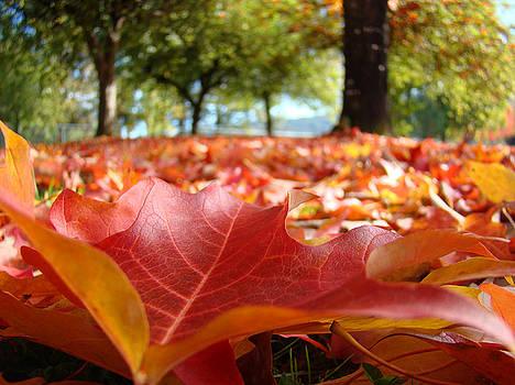 Baslee Troutman - Landscape Trees Park art prints Autumn Fall Leaves Baslee Troutman