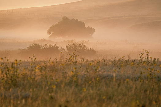 landscape with sunflowers in the light of the rising sun, USA by Ronald Jansen