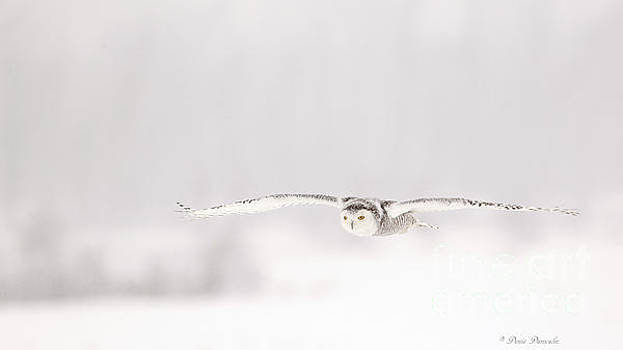 L'ange des cieux by Denis Dumoulin