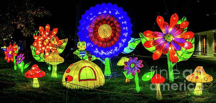 Lantern Flowers by Nick Zelinsky