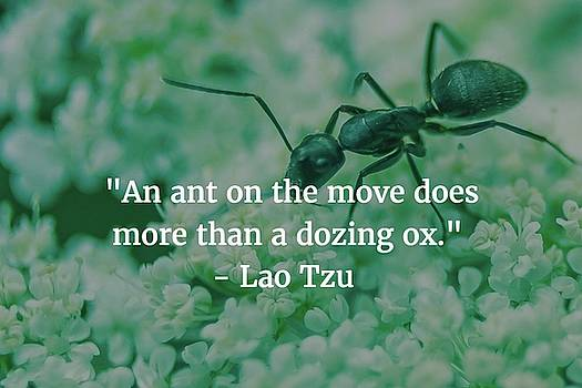 Lao Tzu Quote by Matt Create