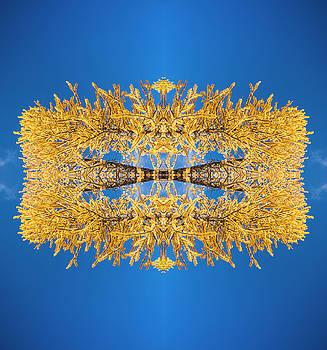 Pelo Blanco Photo - Larch Kaleidoscope 2