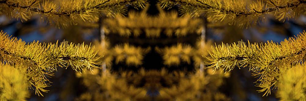 Pelo Blanco Photo - Larch Needles Reflection