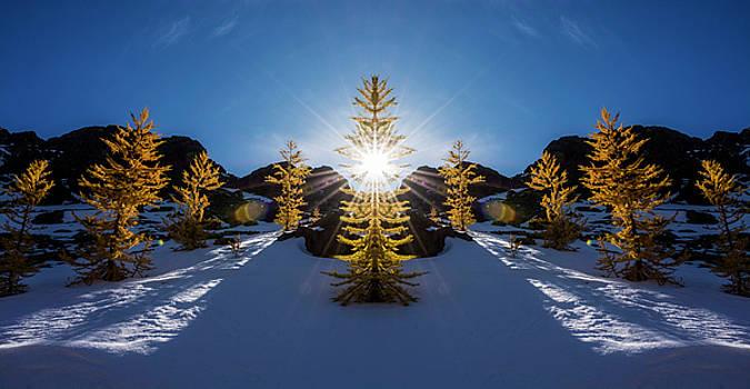 Pelo Blanco Photo - Larches in Snow Reflection