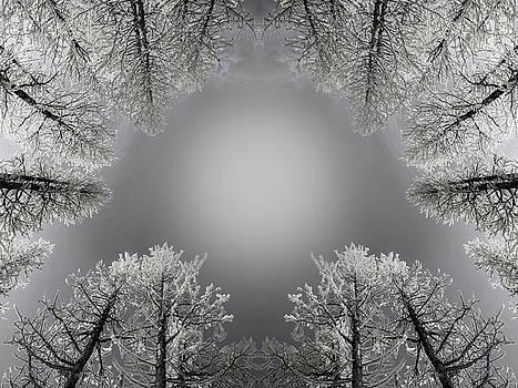 Pelo Blanco Photo - Larches Reflection Black and White
