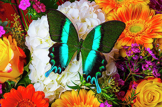 Large Amazing Green Blue  Butterfly by Garry Gay