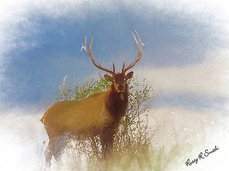 Large bull elk standing in foggy light. by Rusty R Smith