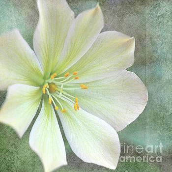 Large Flower by Lyn Randle