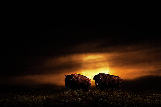 Randall Nyhof - Large Orange Moon Rise with Buffalo