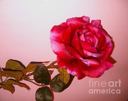 Large Red Rose by Elena Ivanova