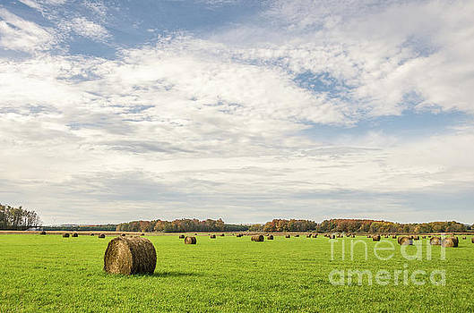 Large, Round, Bales of Hay Under a Blue Sky with Clouds by Sue Smith
