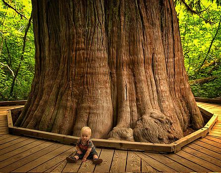 Largest tree Mt Rainier National Park by Edward Coumou