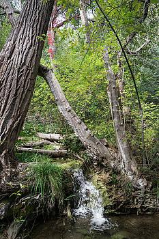 Las Huertas Creek, Sandia Mountains New Mexico by Mary Lee Dereske