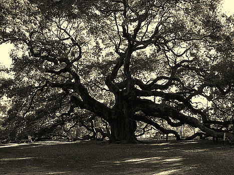 Susanne Van Hulst - Last Angel Oak 72