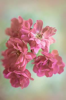 Elvira Pinkhas - Last Autumn Blooms