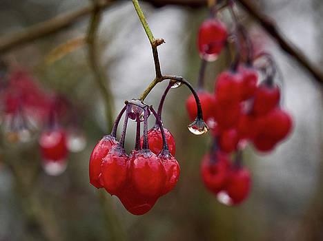 Last berries of the fall by Jouko Lehto