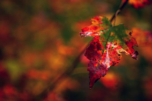 Last Breath of Autumn by Lon Casler Bixby