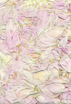 Sandra Foster - Last Chance To Enjoy Peonies