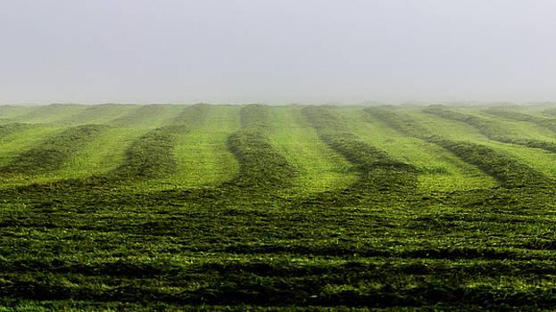 Last Cut of Hay by Tim Kirchoff