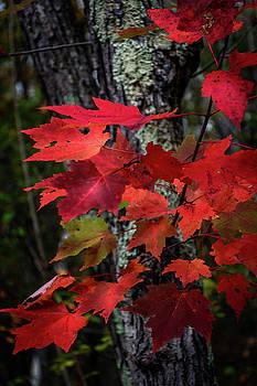 Last Days Of Autumn by Gary Harris