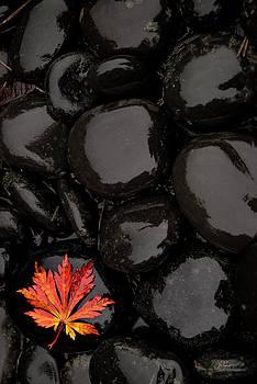 Last Fall Leaf by Lori Grimmett