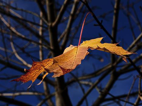 Last leaf of autumn by Darryl Luscombe