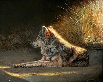 Last Light - Wolf by Linda Merchant