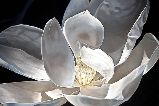 Last Magnolia by Kevin Aita