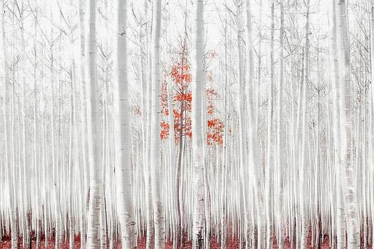 Last of Its Kind by Andrea Kollo