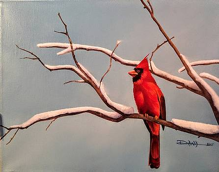 Last snow of winter, Cardinal by Dana Newman