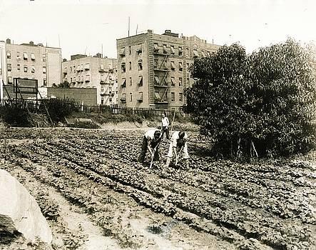 Last Working Farm in Manhattan by Cole Thompson